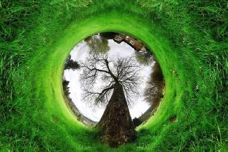 360-tunnel-tree-nature